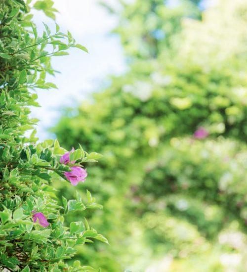 Finlandiapuiston kukkia
