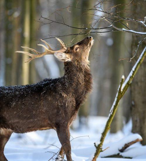 Poro Suomen luonnonpuistossa